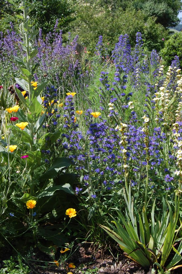 Act now to win the war on weeds