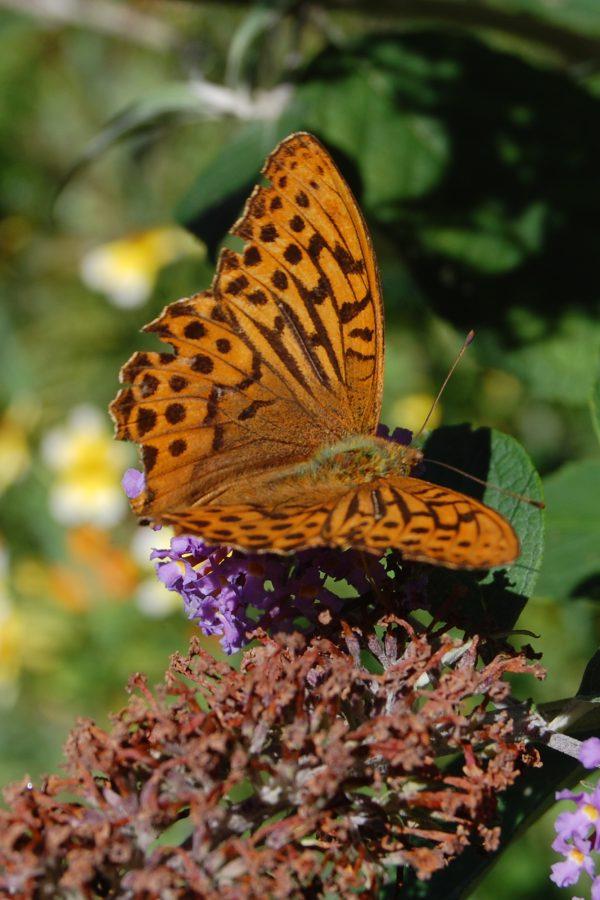 Top 10 ways to create a wildlife friendly garden