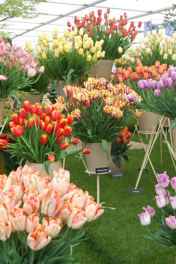 Plan glorious days out at the Chelsea Flower Show – and many more events