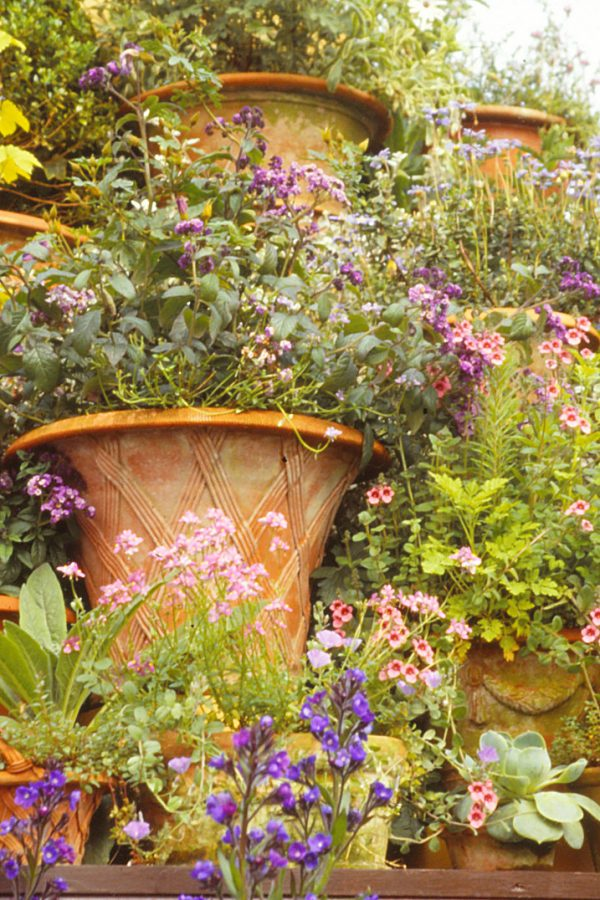 Creating gorgeous summer containers